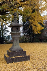 Yellow leaves cover the floor and a piece of an out of the way temple, found while backpacking in Aso.