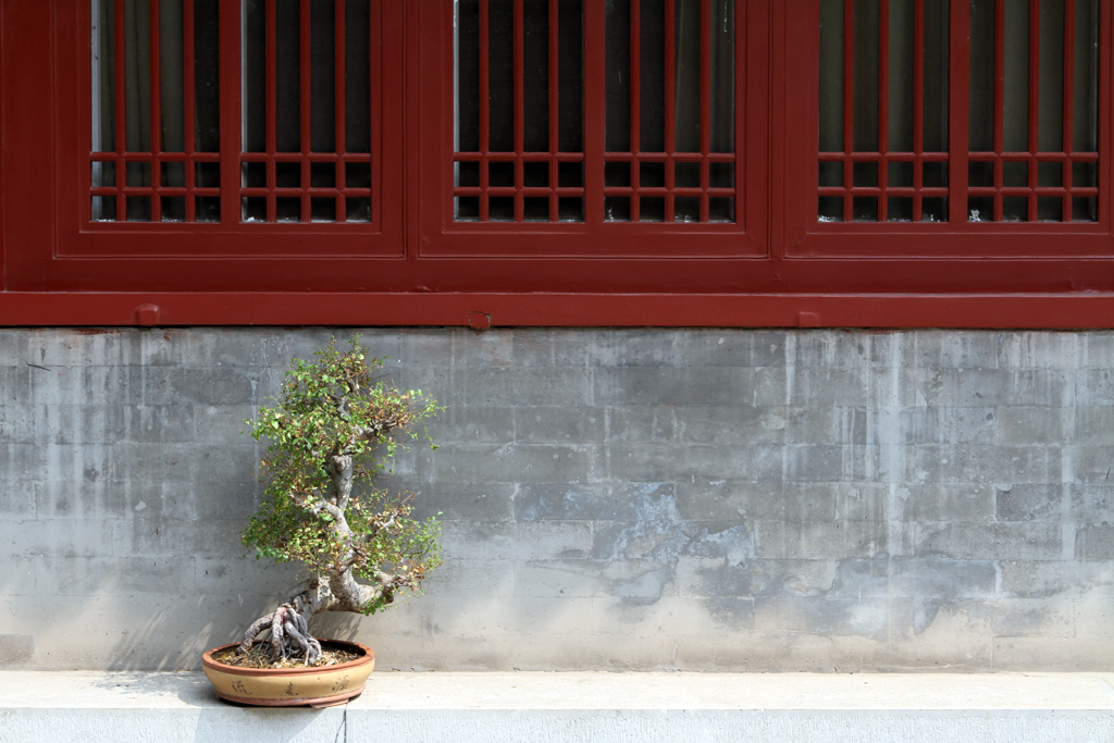 A lone tree rests along the wall in a Chinese Temple in Beijing China