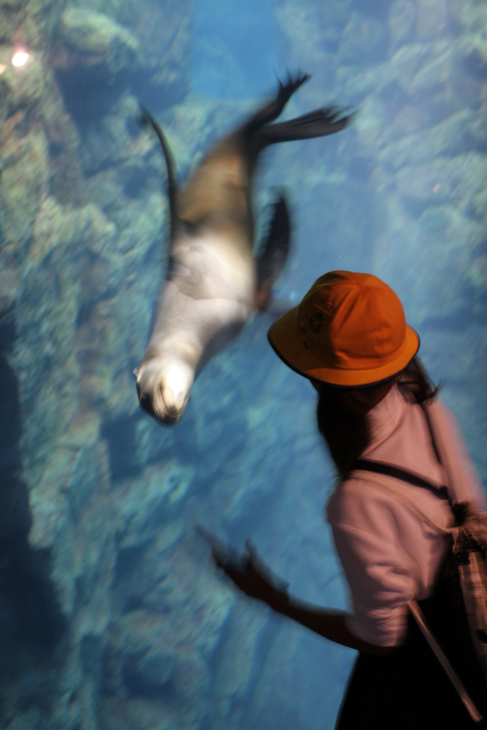 A Japanese girl in an orange hat plays with the sea lion on the other side of thick glass.