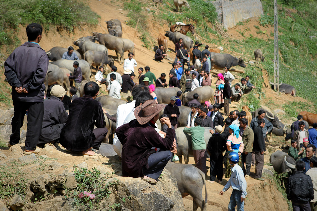 Cattle market at in Bac Ha, North Vietnam