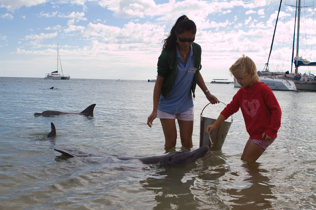 A little girl feeding the wild dolphins at Monkey Mia.