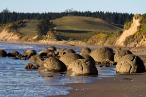 The Moeraki Boulders as the tide comes in along the coast of New Zealand.