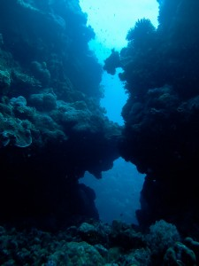 A swim through 10 meters under the sea.