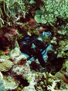 Peek-a-boo - A diver peeks through a natural hole in the coral.
