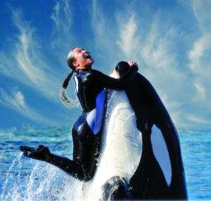 A Killer whale and its trainer