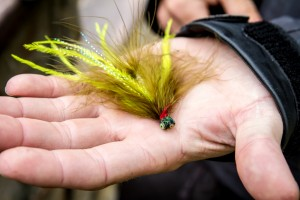 When I asked Joe to pick his favorite fly, here's what he showed us.