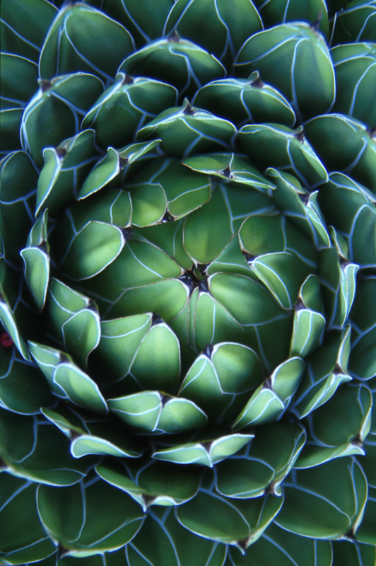The viewpoint of looking down into a succulent at an aboretum in Monte Carlo.
