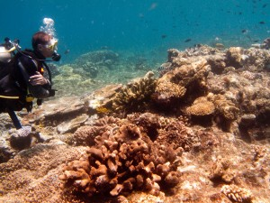 Diving along the Great Barrier Reef