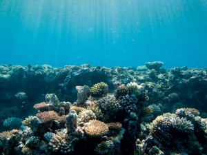 The Great Barrier Reef from underwater