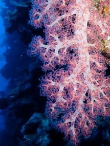 A piece of soft coral is illuminated by the flash of the Camera.