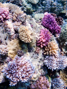 Some of the colorful coral out on the reef.