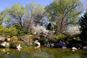 The Japanese Garden at ABQ Biopark
